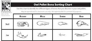 owl pellet bone sorting chart pdf nature watch