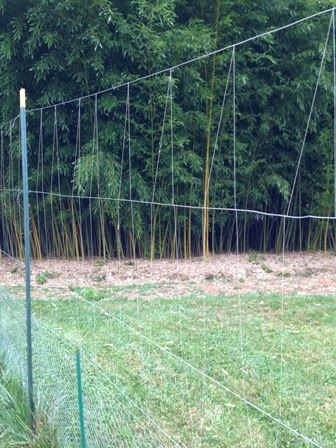 Grow it eat it fishing line deer fence update for How to keep deer out of garden fishing line