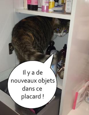 Une chatte dans un placard de salle de bain.