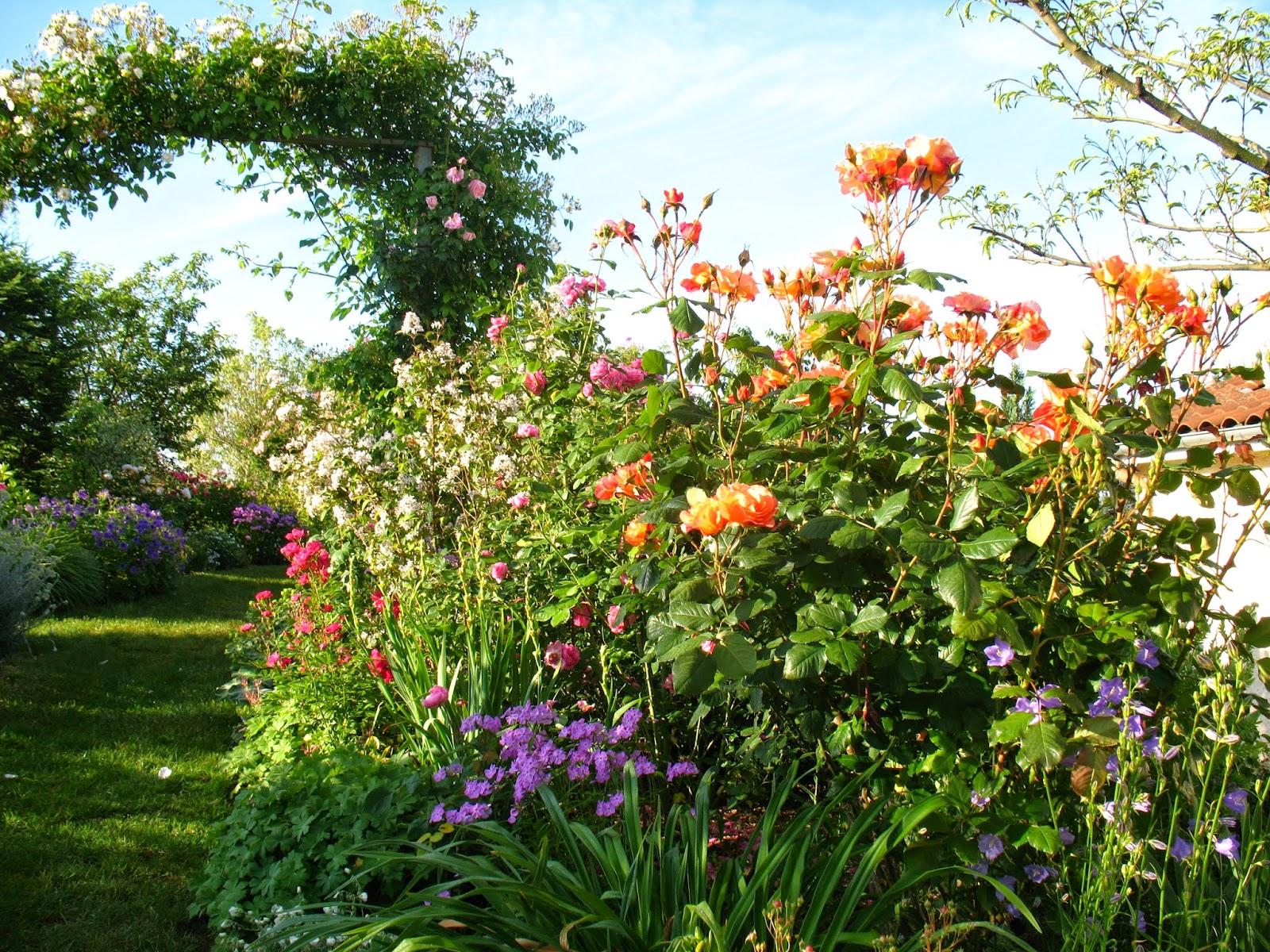 Roses du jardin ch neland un zeste d 39 orange - Jardin de chen ...