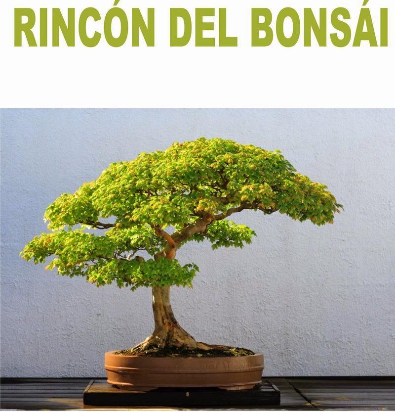 RINCÓN DEL BONSÁI