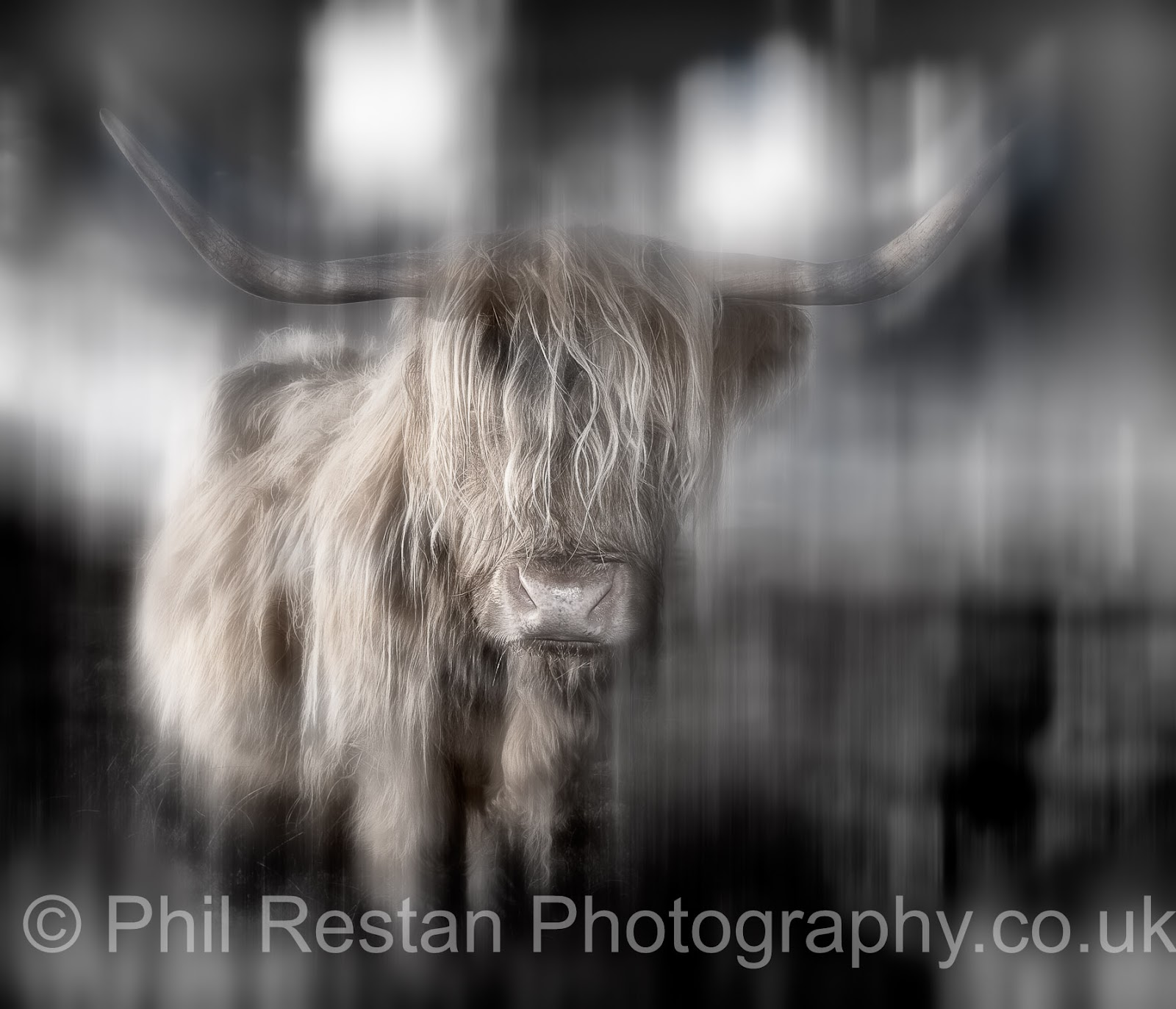 Photo of a digitally manipulated Highland cow