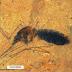 Fosil 46 juta tahun Perut Nyamuk Kandungi Darah Ditemui