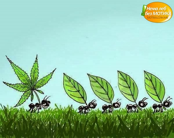 funny marijuana jokes Funny Cartoon Jokes : Marijuana