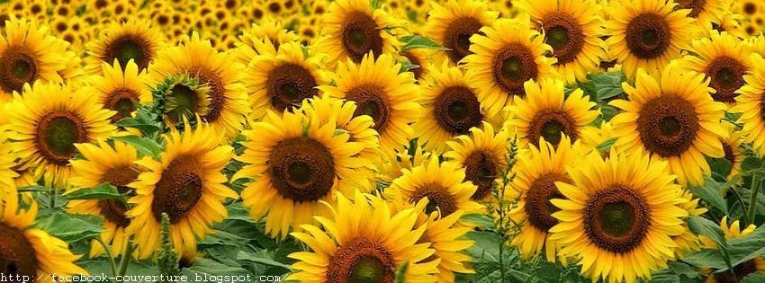 Jolie image de couverture facebook fleur de soleil