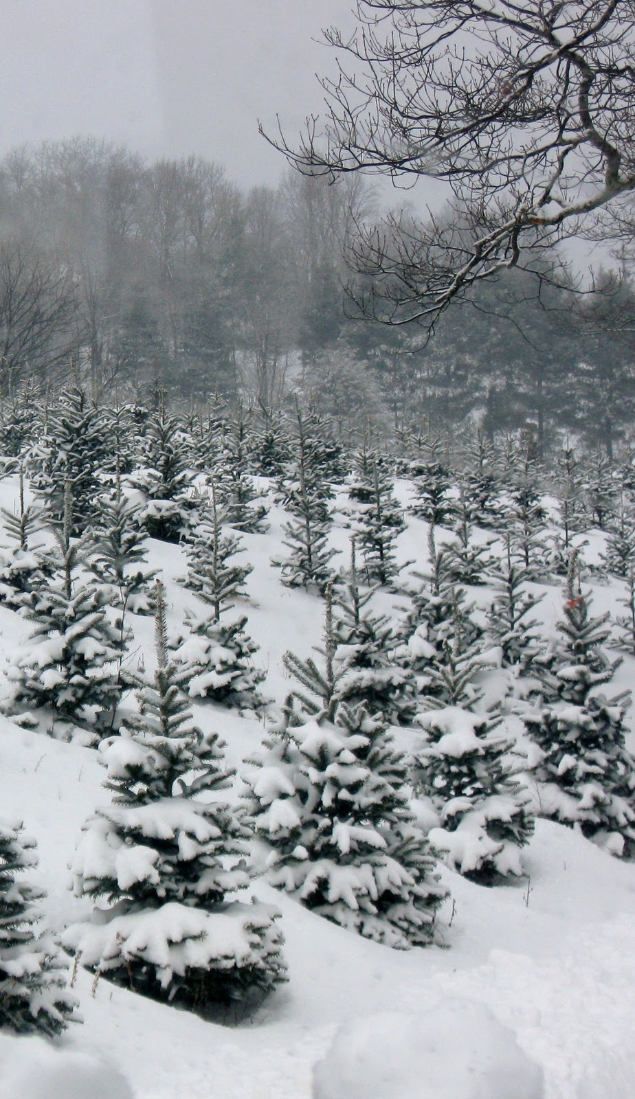 christmas tree snow