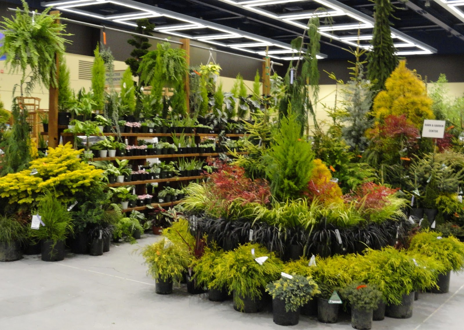 And I Like Their Display Fixture, So Easy To See All The Plants!