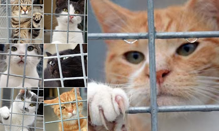 Tierheim-Katzen