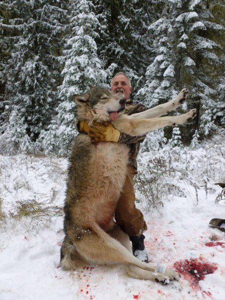 Ps Its Just A Matter Of Time Before One Our Granola Loving Green Peace Hikers Goes Out On Hike And Runs Into Pack These Killers Becomes