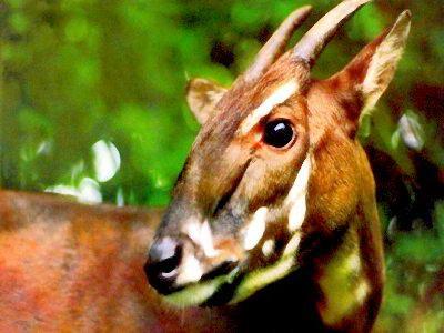 http://koleksigambarunik.blogspot.com