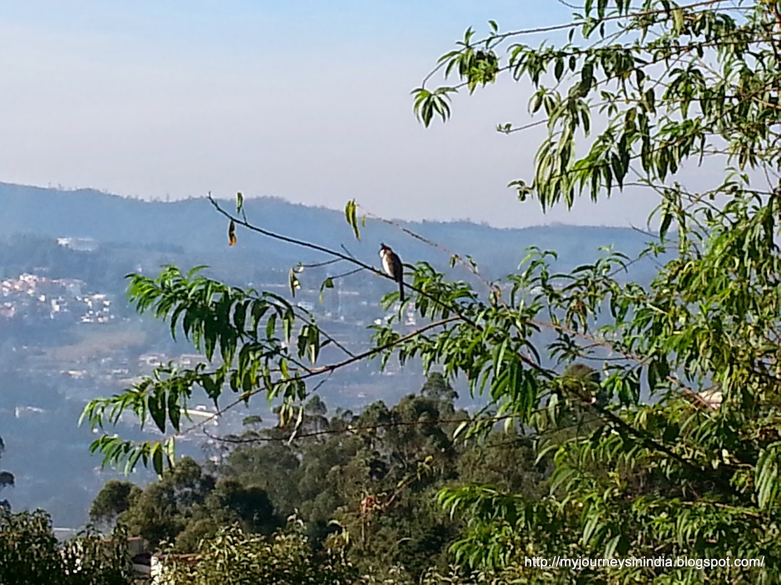 King's Cliff Ooty
