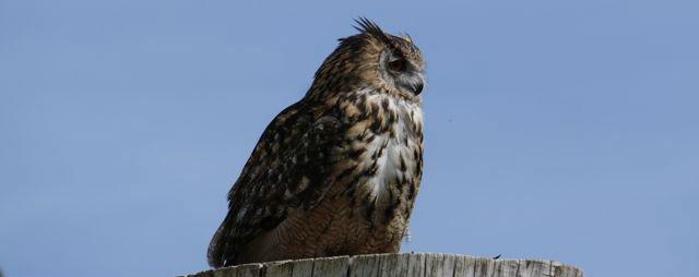 Birds of prey at Leeds Castle
