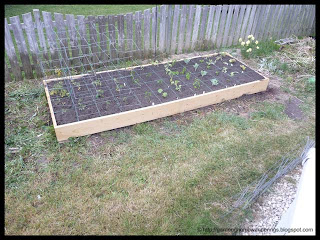 new square foot garden bed planted