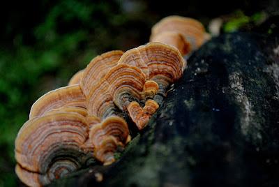 Orange Mushroom on tree