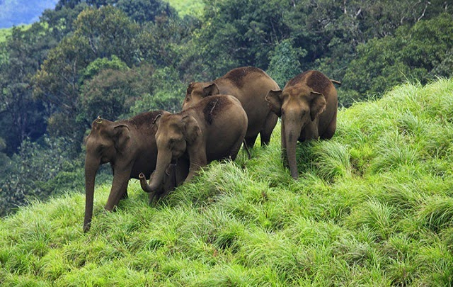 Idukki wildlife Sanctuary , Kerala
