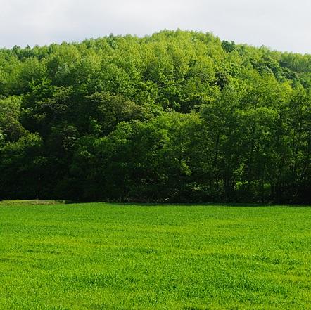Q244 5つの木