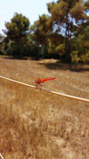 744-concurso-fotografia-libélula-helicoptero-sietecuatrocuatro
