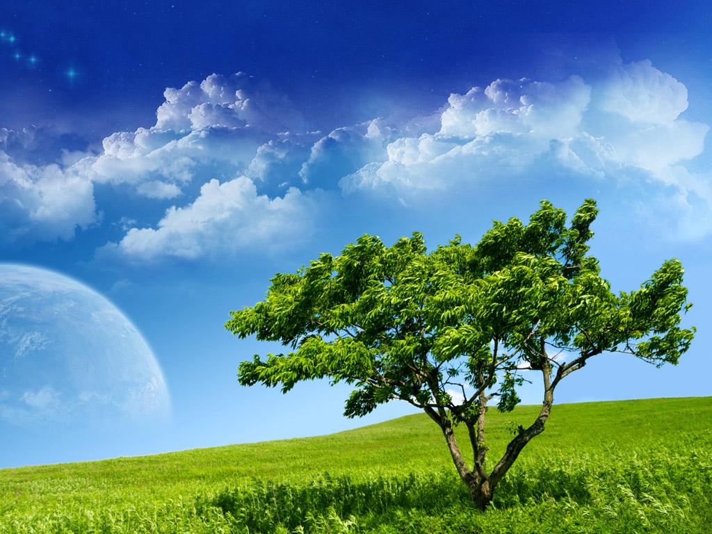 http://4.bp.blogspot.com/-XUy8LUa03yk/Tc-ClDb4BtI/AAAAAAAAADA/_t7Yjf4ecGM/s1600/ws_Green_Tree_1024x768.jpg