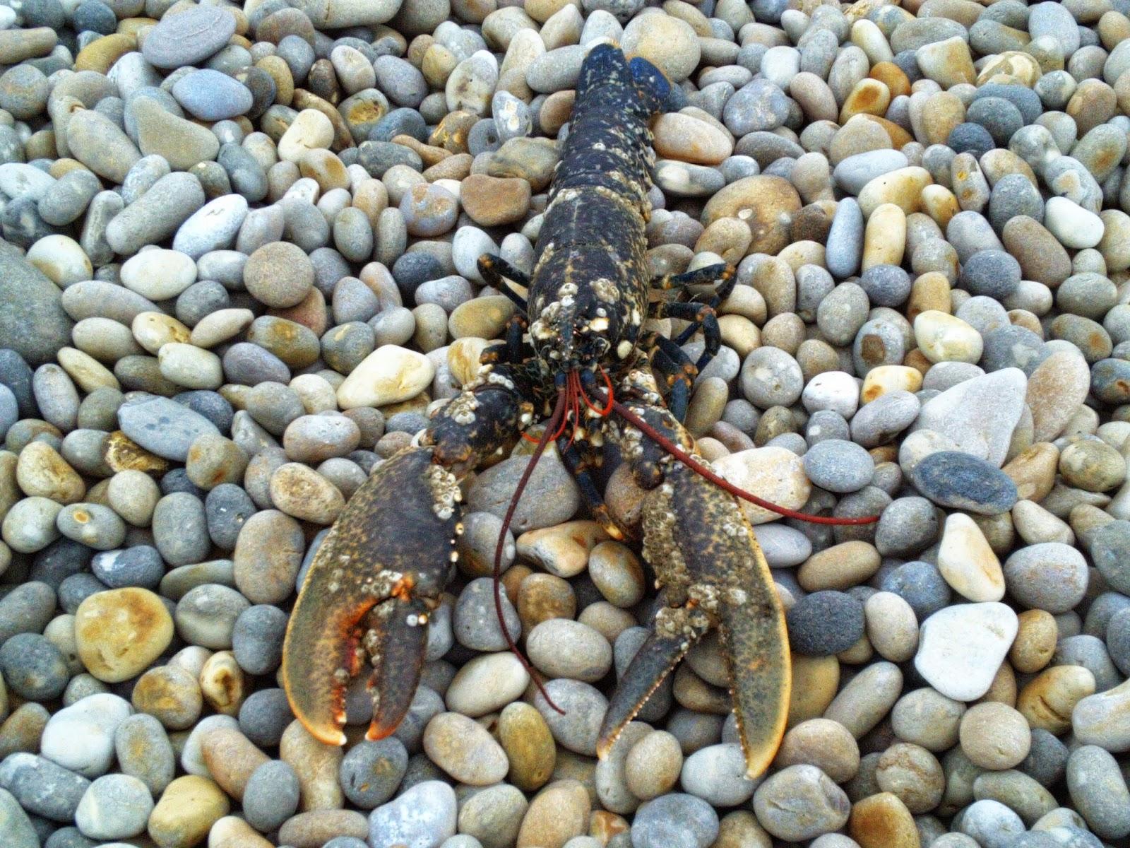 Portland lobster for Portland maine fishing