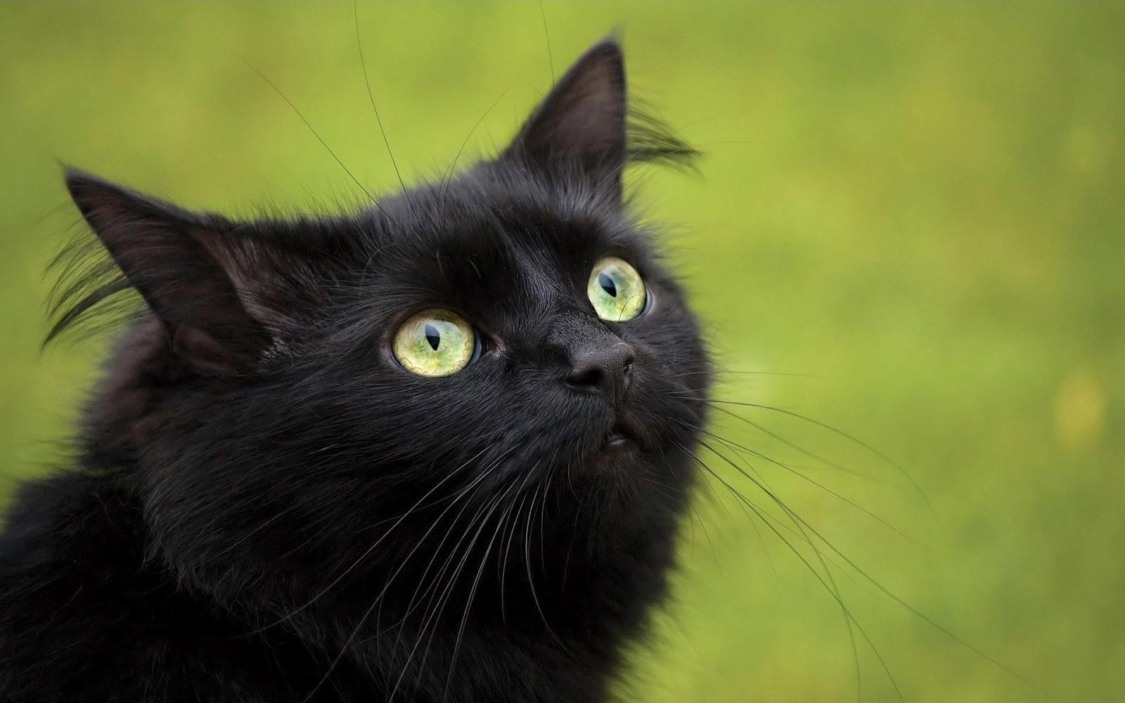 Cat Eyes Black Background