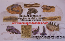 Moulages de fossiles