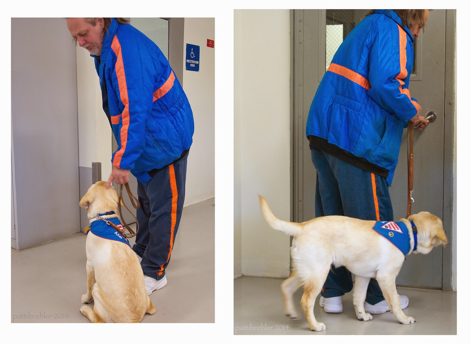 This is two photos in one. On the left, a man wearing a blue and orange striped jacket and the blue prison pants is reaching down with his left hand to a yellow lab puppy. The puppy is sitting with his back to the camera. The man is holding the puppy's brown leather leash in his left hand. In the photo on the right, the same man is approaching a door that has the handle on the right side, the man is just turning the handle. He is holding the leash in his right hand and the yellow lab puppy is walking around the man's back to his right side. The puppy is peering around the man's leg toward the door.