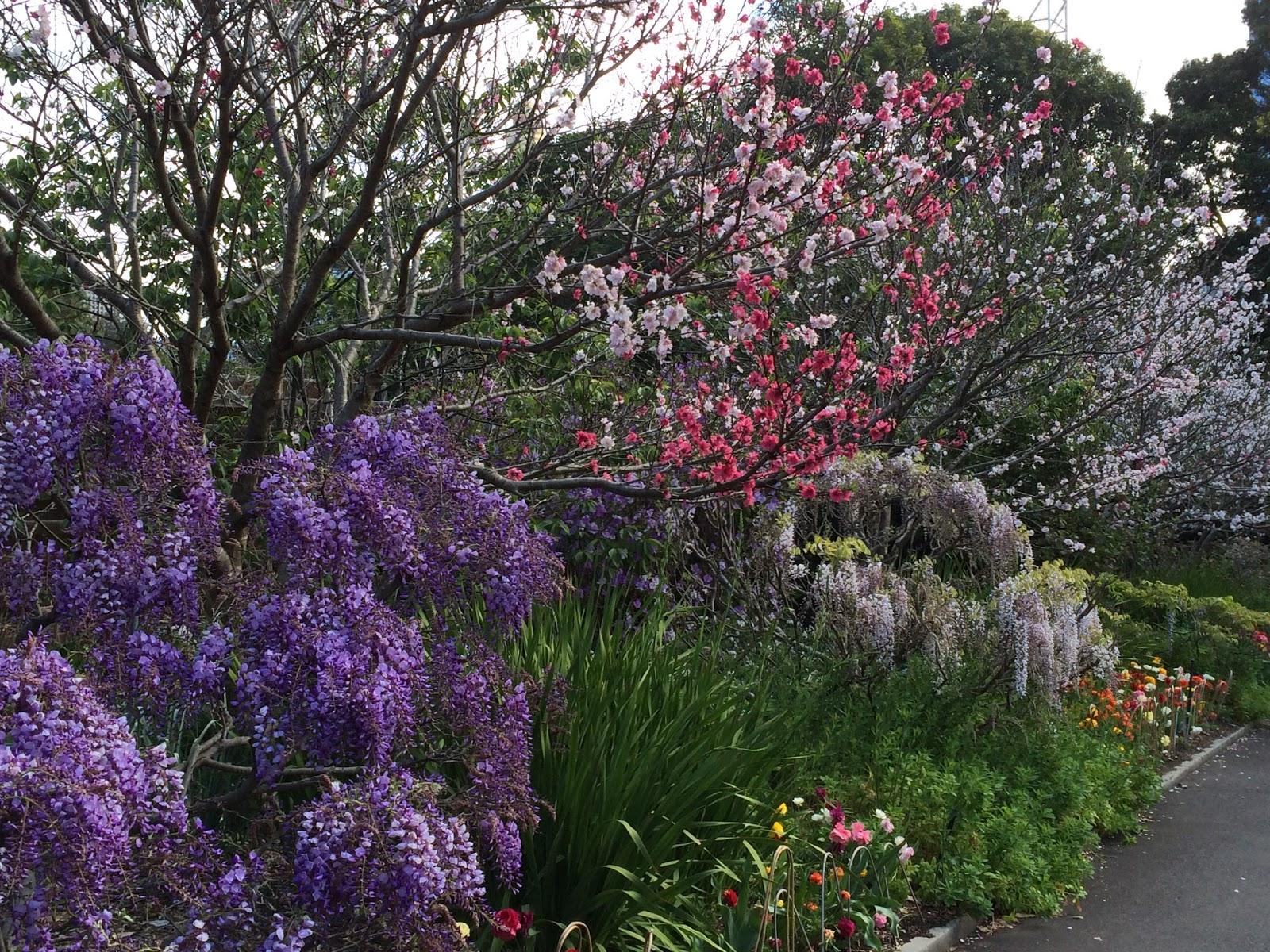Un french toast en australie le printemps fleuri du for Jardin printemps 2015