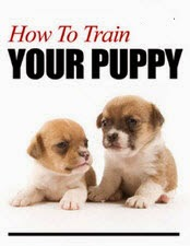 How to House Train a Puppy - How to Train a Puppy