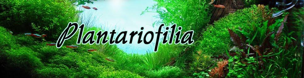 PLANTARIOFILIA
