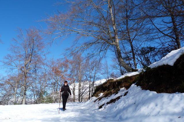 Hiking MOntegrande Beech Forest Asturias