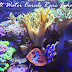Salt Water Corals in Brilliant Colors