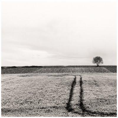 Colza, vigne et arbre, 2013