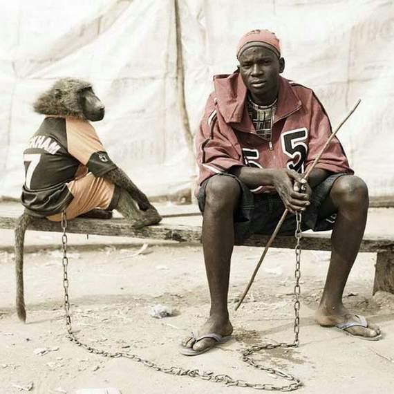 pet-bizarro-monkey