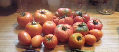 Large haul of different kinds of tomatoes