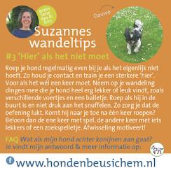 Gratis tips voor fijne wandelingen met je hond en 'n antwoord op de FAQ