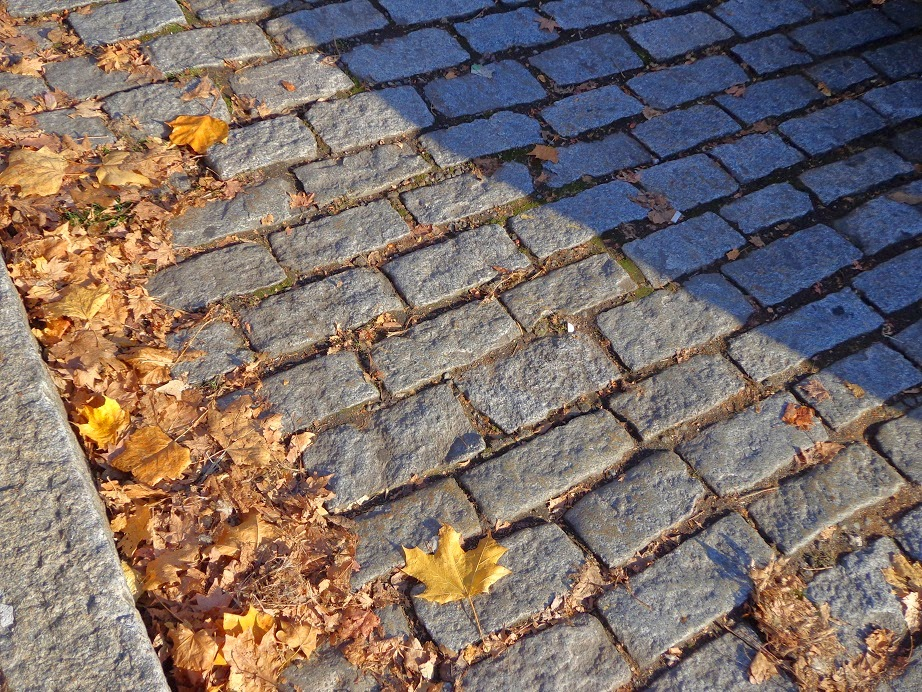 Empty leaf-spattered stone road