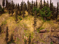 Mountain forest scenery