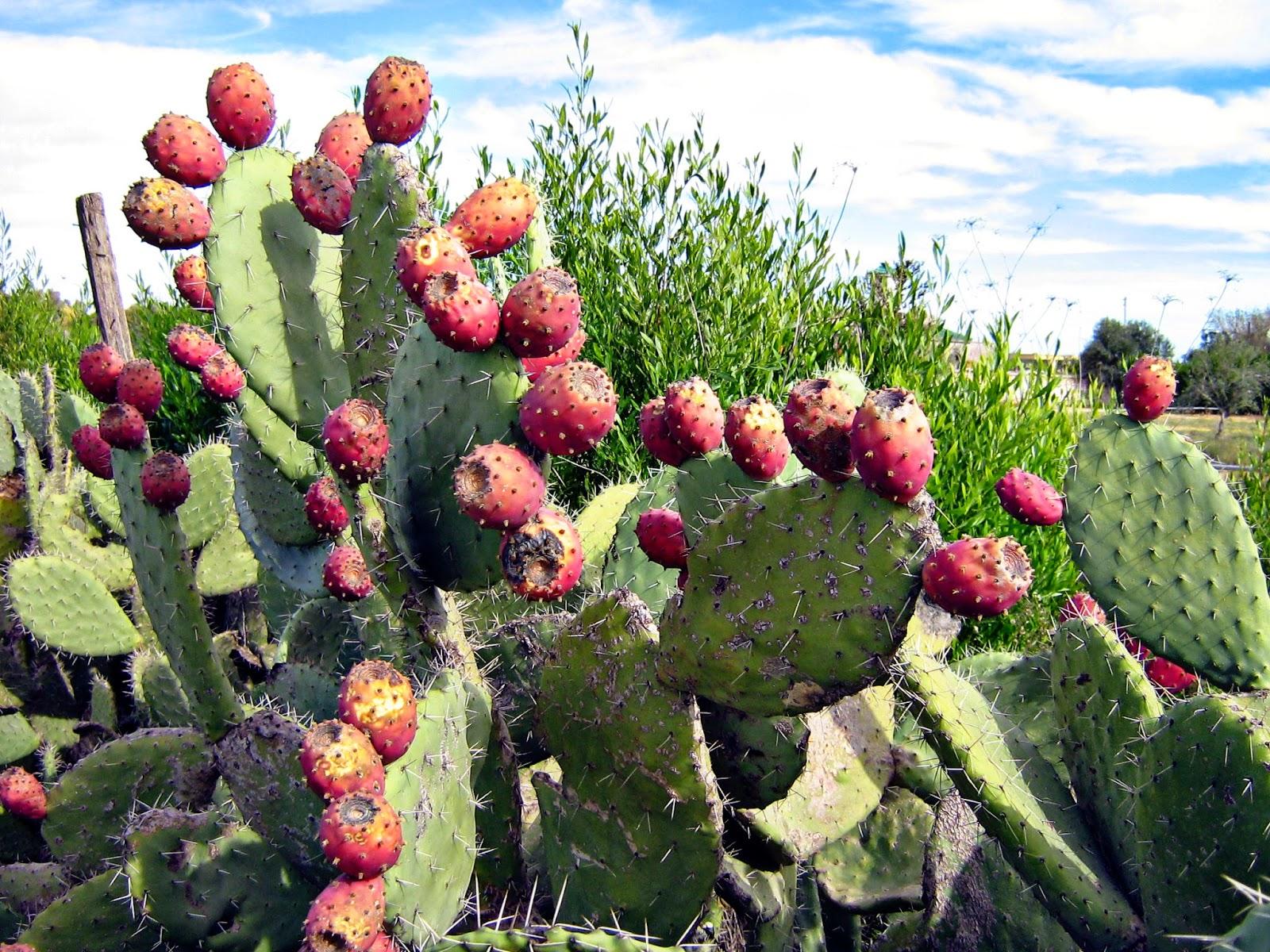 Con espinas Cactus medicinales