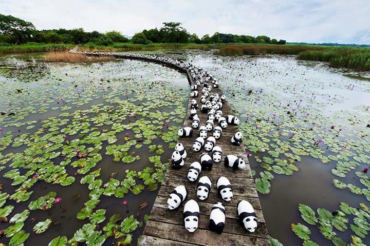 osos pandas en peligro de extincion