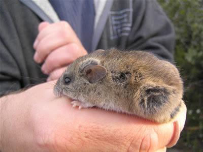 http://4.bp.blogspot.com/-XXGsb6VaDX0/TaPoAWD2MJI/AAAAAAAAAhw/q67Fhnhy6yU/s1600/New+Holland+Mouse.jpg
