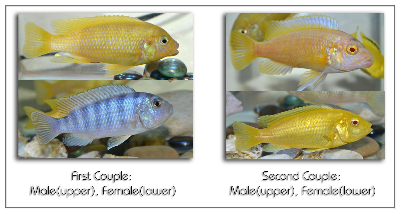 Artan 39 s blog fish mating season for How to season fish