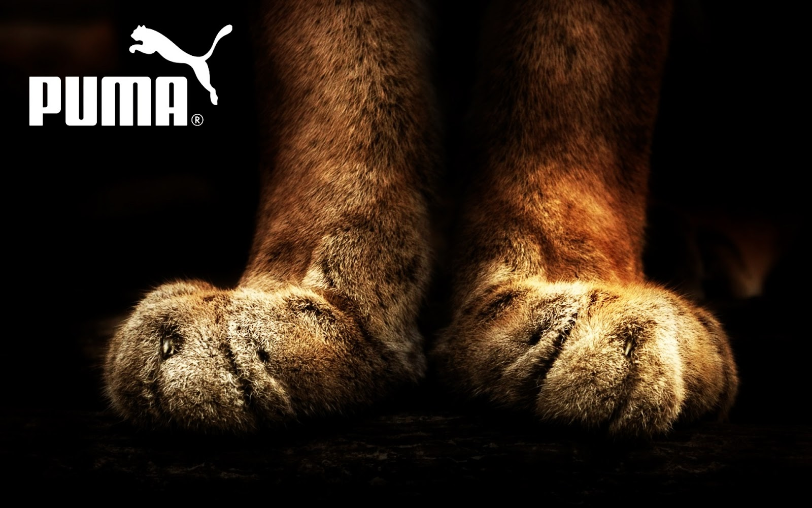 Puma Lion Feets
