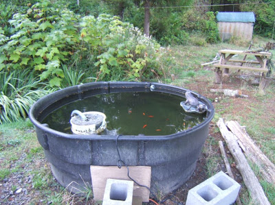 Chas 39 compilation the shocking truth about the common for Koi spawning pool