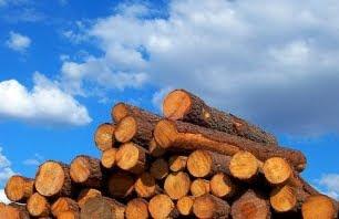 biocombustibles-biomasa
