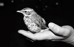 Bättre en fågel i handen än tio i skogen