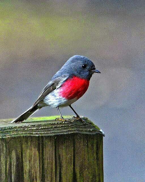 أجمل طيور برية نادرة بألوان