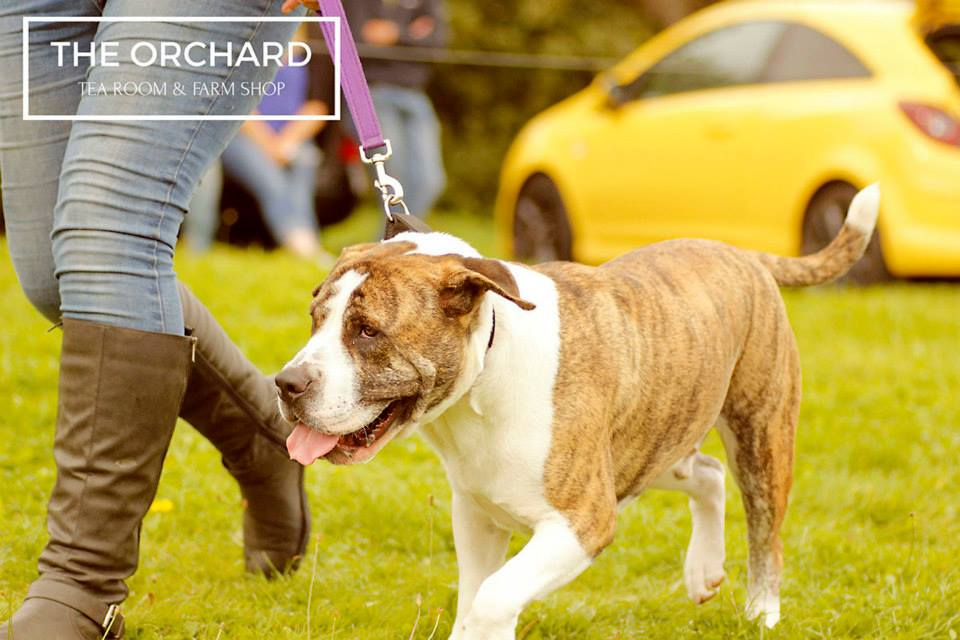 Large Breed Dog Rescue Fun Day