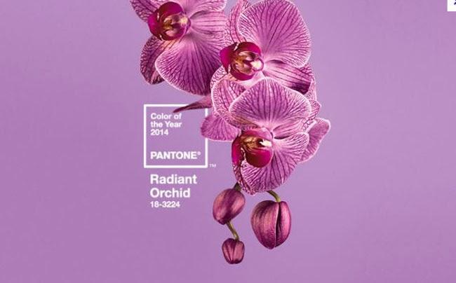 radiant+orchid-blog.jpg