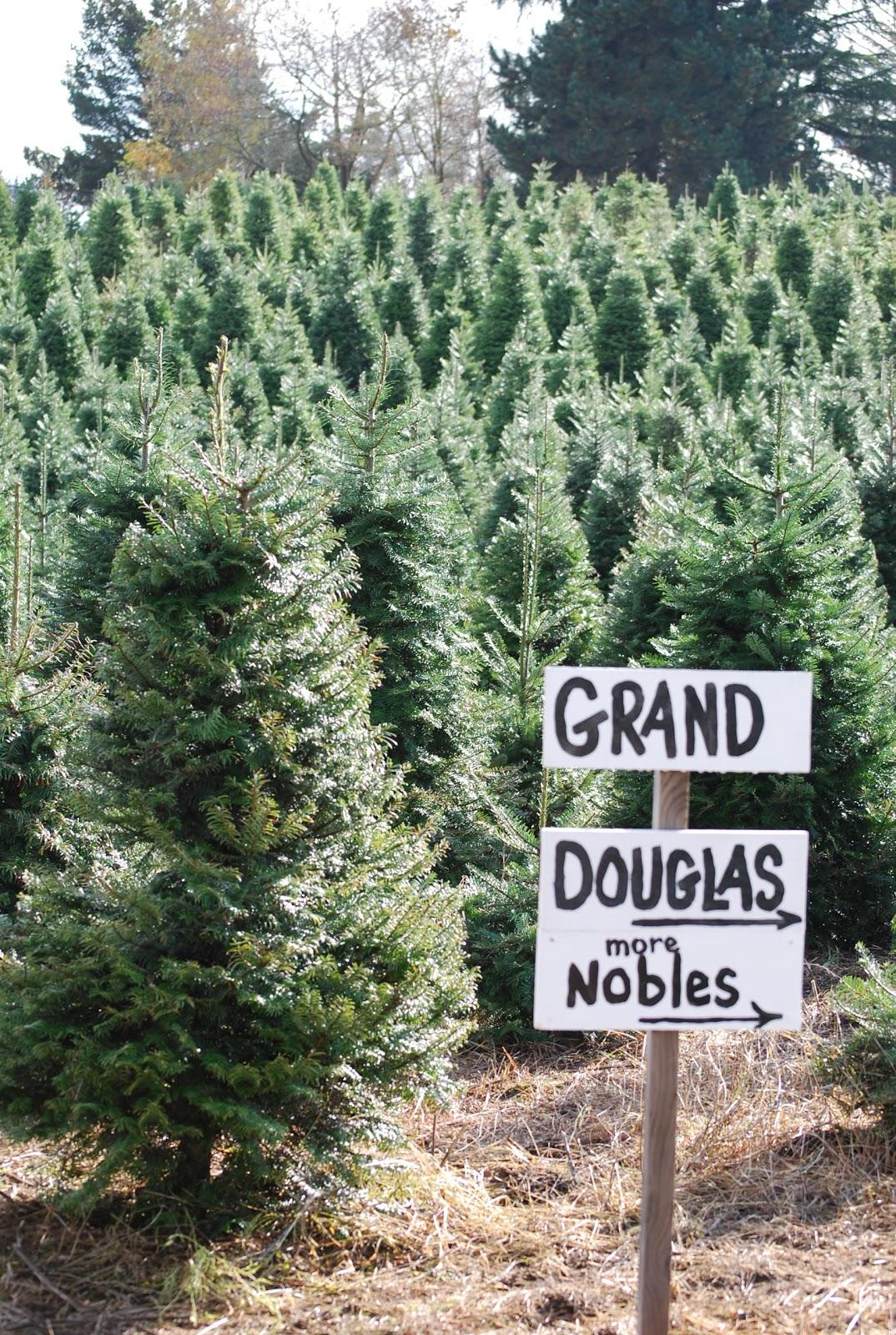 28 best sauvie island christmas trees sauvie island