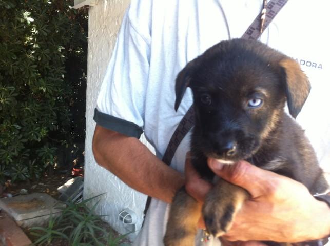 Adotta un cane a siracusa cuccioli 50 giorni occhi - Cane occhi azzurri ...